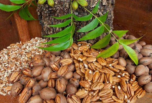 healthy pecan nuts